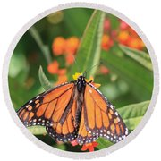 Monarch Sipping Round Beach Towel