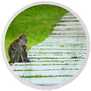 Monkey Mother With Baby Resting On A Walkway Round Beach Towel