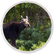 Moose Baxter State Park 4 Round Beach Towel