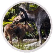 Moose Brunch Round Beach Towel