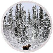 Moose In Deep Snow, Near Teslin, Yukon Round Beach Towel