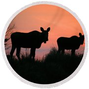 Moose Silhouetted At Sunset Round Beach Towel