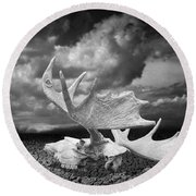 Moose Skull On Parched Earth Round Beach Towel