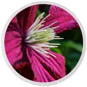 Morning Clematis Round Beach Towel