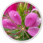 Morning Dew On Pink Cleome Round Beach Towel