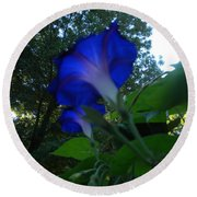 Morning Glory 01 Round Beach Towel