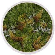 Moss And Lichen Round Beach Towel