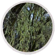 Moss Covered Trees Round Beach Towel