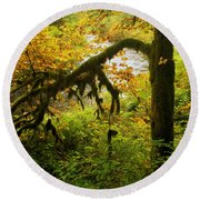 Moss In The Forest Round Beach Towel