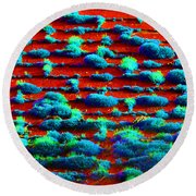 Moss On A Roof Round Beach Towel