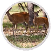 Mother And Yearling Deer Round Beach Towel