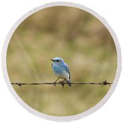 Mountain Bluebird On A Fence Wire Round Beach Towel