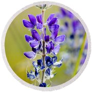 Mountain Lupine Glacier National Park Round Beach Towel