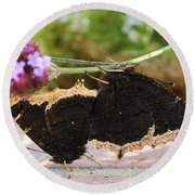 Mourning Cloak Butterfly Lovin' Round Beach Towel