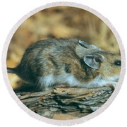 Mouse On A Log Round Beach Towel
