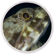 Mouth Of A Variegated Lizardfish, Papua Round Beach Towel