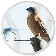 Mrs. Grosbeak Round Beach Towel