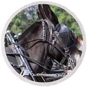 Mule Days - Benson - A Pair Of Aces - Mules Round Beach Towel