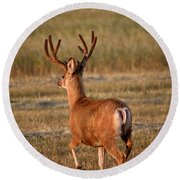 Mule Deer Buck In An Alberta Field Round Beach Towel