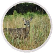 Mule Deer Winthrop Wa 9176 Round Beach Towel