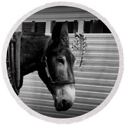 Mule - Tied Up For A While Round Beach Towel
