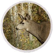 Mulie Buck 3 Round Beach Towel