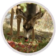 Mulie Buck 4 Round Beach Towel