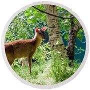 Muntjac Deer - Muntiacus Reevesi Round Beach Towel