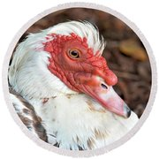 Muscovy Type II Round Beach Towel