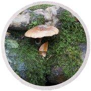 Mushroom In Moss Round Beach Towel