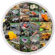 Mushroom Planet - Montgomery County Pa Round Beach Towel