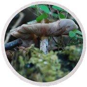 Mushroom Up Close 7046 1676 Round Beach Towel