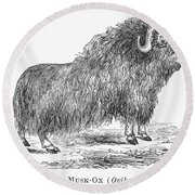 Musk Ox Round Beach Towel