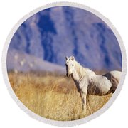 Mustang Round Beach Towel by Mark Newman and Photo Researchers