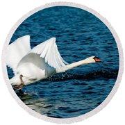 Mute Swan Gaining Momentum Round Beach Towel