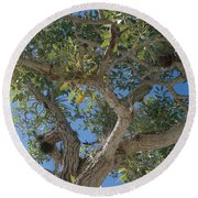Naples Tree Round Beach Towel
