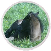Napping Colt Round Beach Towel