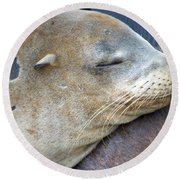 Napping Round Beach Towel
