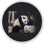 National Zoo Panda Round Beach Towel