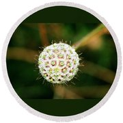 Nature's Perfect Orb Round Beach Towel