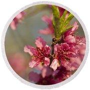 Nectarine Blossoms Round Beach Towel
