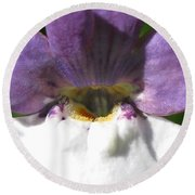 Nemesia From The Tapestry Mix Round Beach Towel
