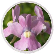 Nemesia Named Compact Pink Innocence Round Beach Towel