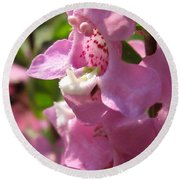Nemesia Named Poetry Lavender Pink Round Beach Towel
