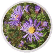 New England Aster Wildflower - Purple Round Beach Towel