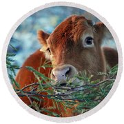 New Years Morning Cow Round Beach Towel