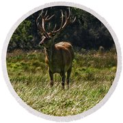 New Zealand Elk Round Beach Towel