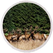 Northcoast Elk Along The 101 Round Beach Towel