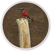 Northern Carmine Bee-eater Round Beach Towel by Tony Beck