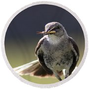 Northern Mockingbird - Lunch Is On The Way Round Beach Towel